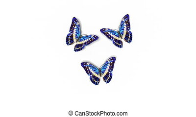Beautiful Blue Colored Butterflies Morpho Menelaus Fly into the Screen, Sit Down and Fly Away. White Green Backgrounds Close-up. Loop-able 3d Animation with Alpha Channel. 4k Ultra HD 3840x2160