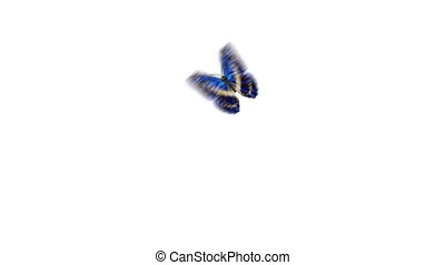 Beautiful Blue Colored Butterfly Flying and Sitting on White...