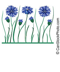 Beautiful blue cornflower isolated on white background