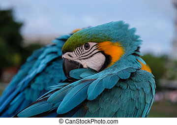 Beautiful Blue Crown Conure Parrot