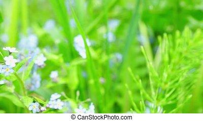 Beautiful blue flowers at field