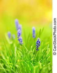 Beautiful blue flowers on a meadow (shallow DoF)