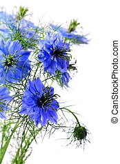 Beautiful blue flowers on a white background.