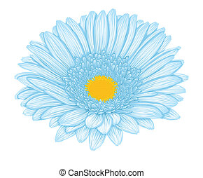 Beautiful blue gerbera isolated on white background .