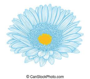 Beautiful blue gerbera isolated on white background .