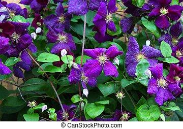 Beautiful blue purple flowers