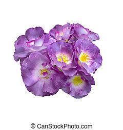 beautiful blue roses bouquet