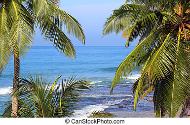 sea landscape with palm leaves on foreground