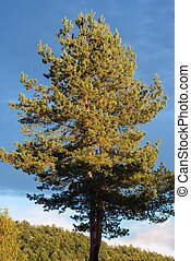 beautiful blue sky abov the tree