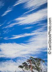 beautiful blue sky with top of the tree