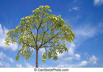 Beautiful blue sky with tree