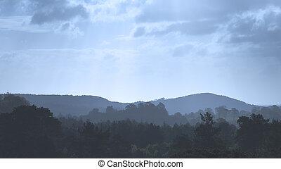 Beautiful blue toned morning landscape of trees on ridgeline