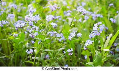 Beautiful blue wild flowers.