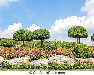 Beautiful bonsai tree in the park