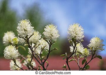 Bottlebrush Flower Shrub - Beautiful Bottlebrush Flower ...