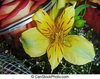 Beautiful bouquet colour