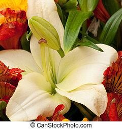 bouquet - beautiful bouquet of flowers, background