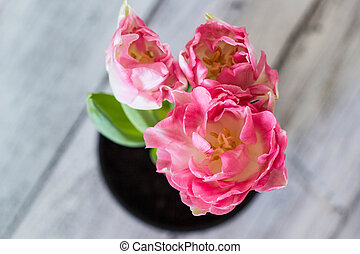 Beautiful bouquet of pink tulips on a white background