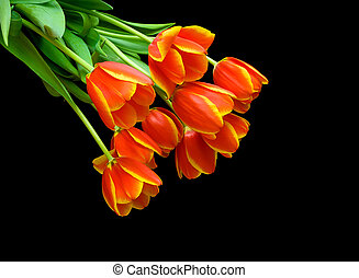 Beautiful bouquet of tulips on a black background.