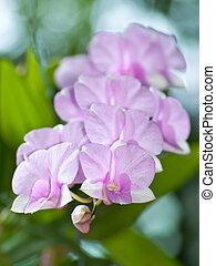 Beautiful bouquet pink orchid flower - Beautiful bouquet of...