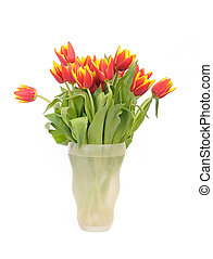 beautiful bouquet red tulips in vase on white background