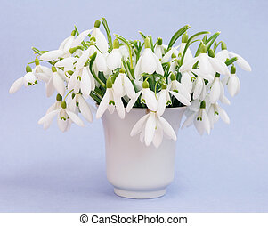 snowdrops - Beautiful bouquet snowdrops in a vase