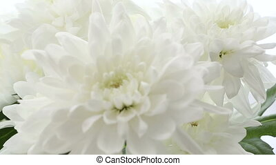 Beautiful bouquet white chrysanthemums on white background. Video is blurred and out of focus.