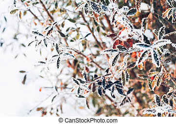 beautiful branch bush leaves in frost on the background of winter forest