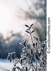beautiful branch bush leaves in frost on the background of winter sun