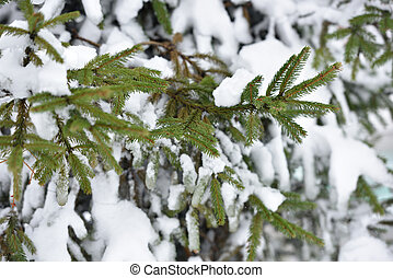 Beautiful branch of a Christmas tree under the fluffy snow