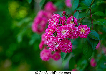 Beautiful branch with bright pink flowers