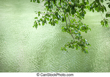 beautiful branch with leaves on a background of water