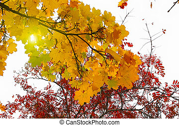 Beautiful branches of autumn trees