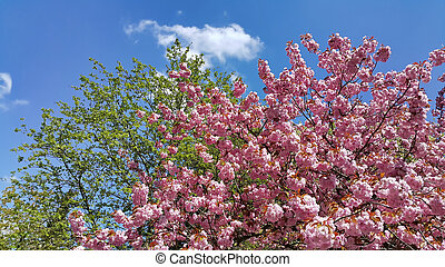 Beautiful branches of flowering spring trees on blue sky background