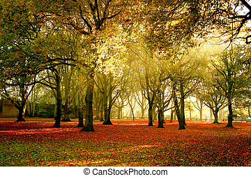 Beautiful bright autumn colors of the forest