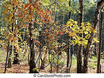 Beautiful bright autumn trees
