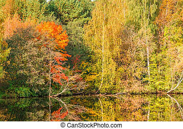 Beautiful bright autumn trees near the lake in the park, scenic landscape in October