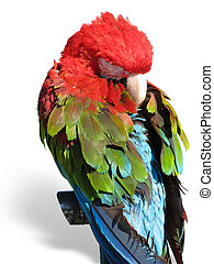beautiful bright colored macaw parr