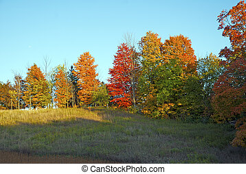 Beautiful bright colors of trees in fall