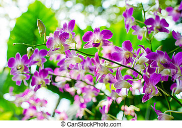 Beautiful bright orchid flowers in Botanical garden ,...