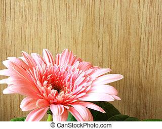 beautiful bright pink disy gerbera on wooden background