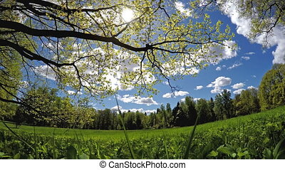 Beautiful, bright summer landscape - the wood behind a meadow and branches of trees in the foreground, 4k video
