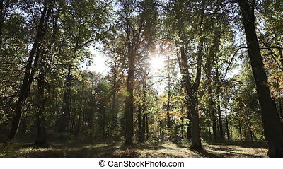 Beautiful, bright summer landscape - the wood behind a meadow and branches of trees in the foreground
