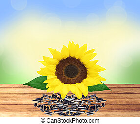 beautiful bright sunflower and seeds on wooden table over nature background