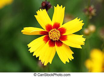 brightly red and yellow flower