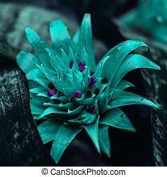 Beautiful bromelia flower
