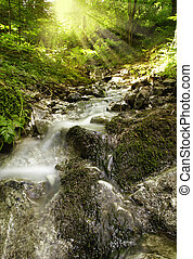 Beautiful alpine brook in the forest with rays of sun