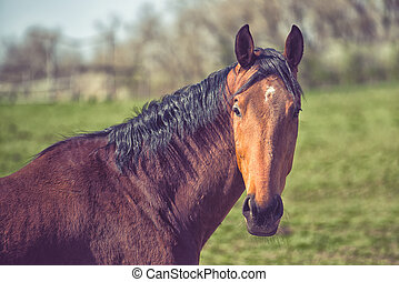 Beautiful Brown Chestnut Horse on the Animal Farm