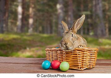 Easter rabbit in a basket