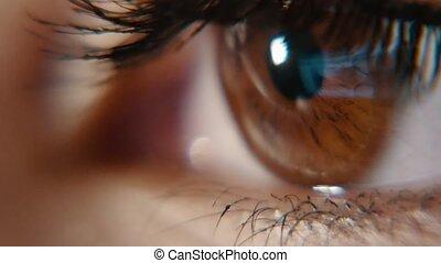Beautiful brown female eye with long eyelashes winking and...